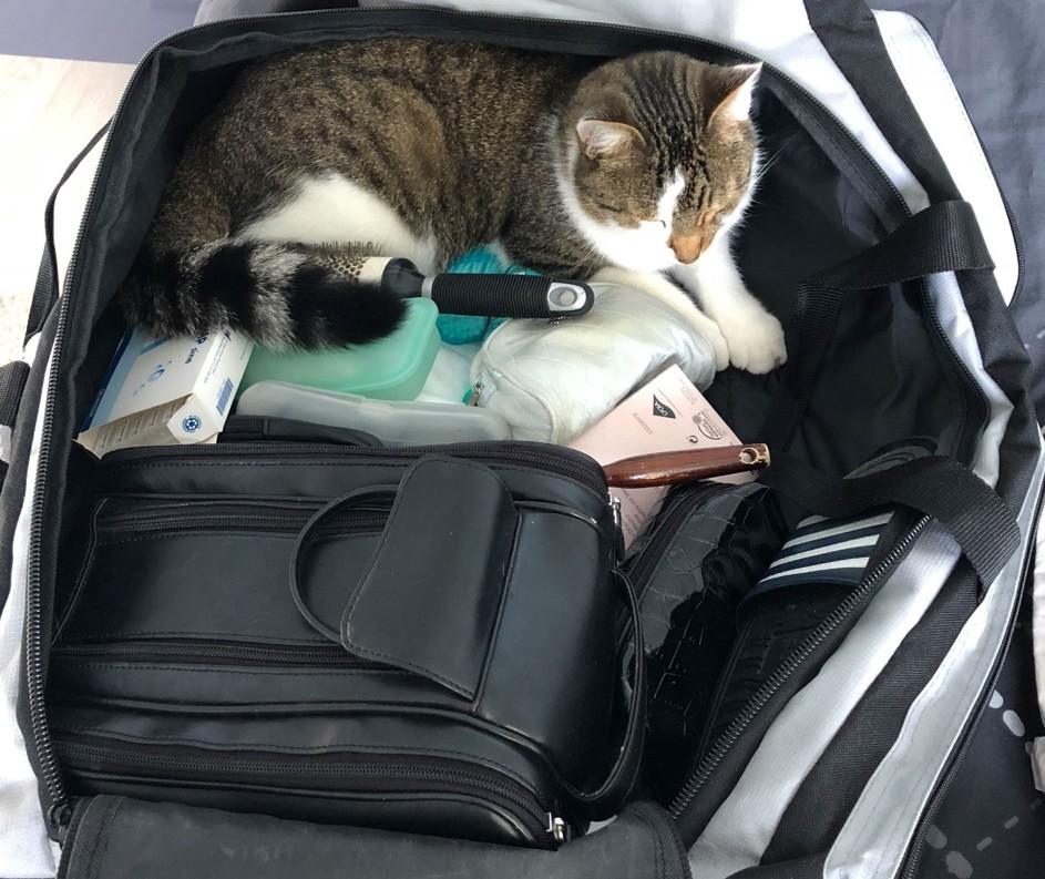 Die wollen verreisen – aber nicht ohne mich!